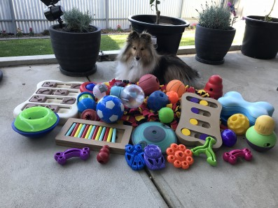 Fluffy dog with pile of toys to play with