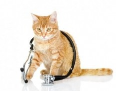 Cat with Stethoscope