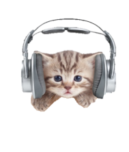 Cat with headphones